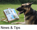 dogs news and tips